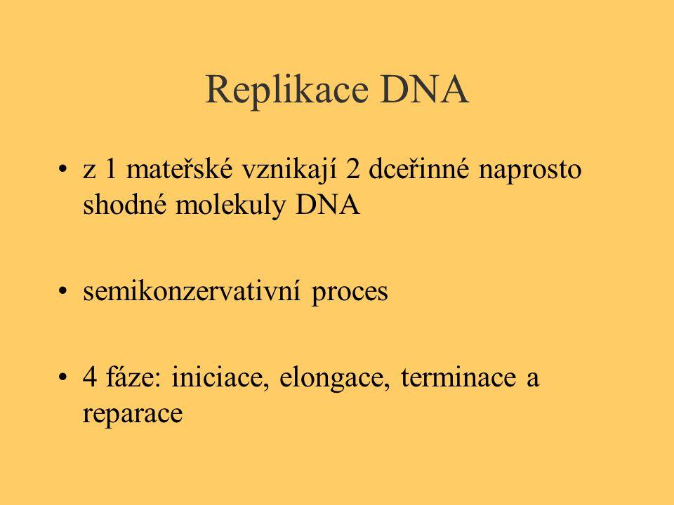 Replikace DNA z 1 mateřské vznikají 2 dceřinné naprosto shodné molekuly DNA. semikonzervativní proces.