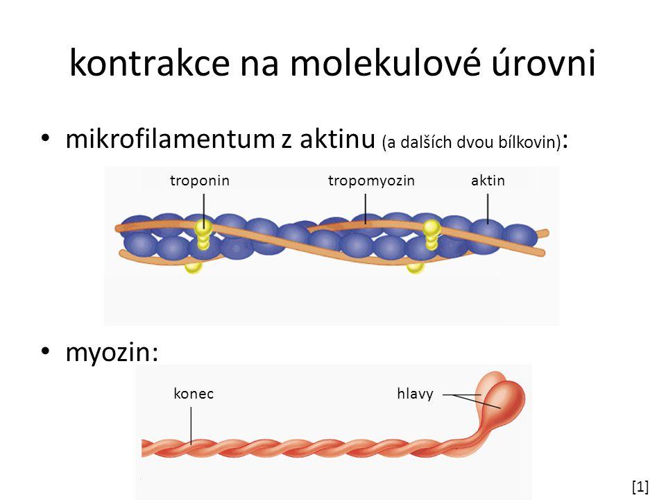kontrakce na molekulové úrovni