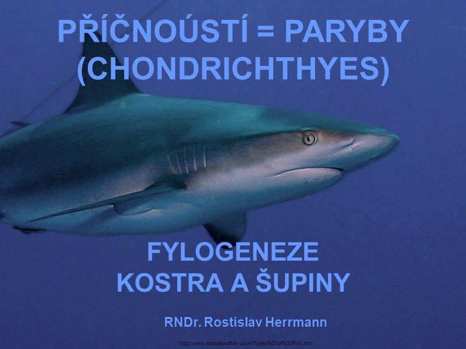 RNDr. Rostislav Herrmann