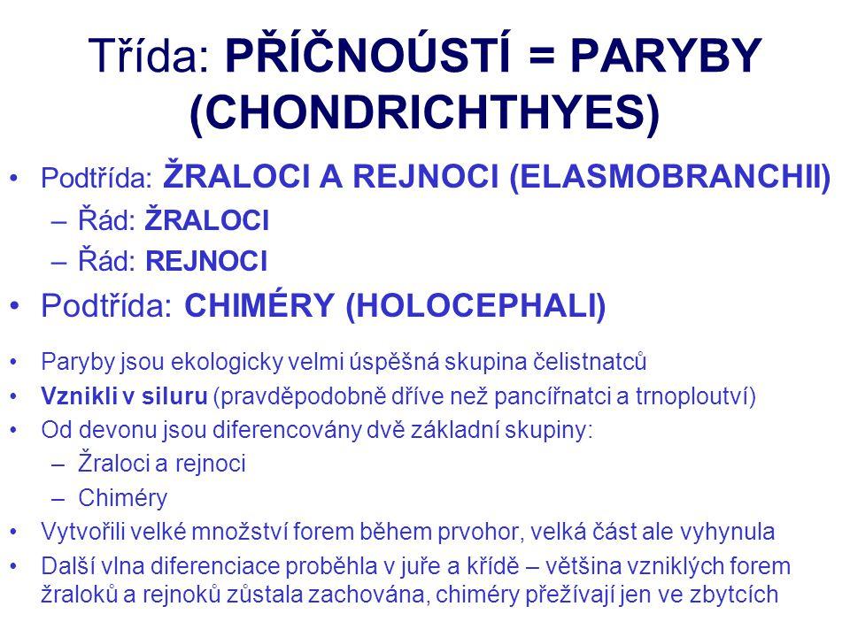 Třída: PŘÍČNOÚSTÍ = PARYBY (CHONDRICHTHYES)