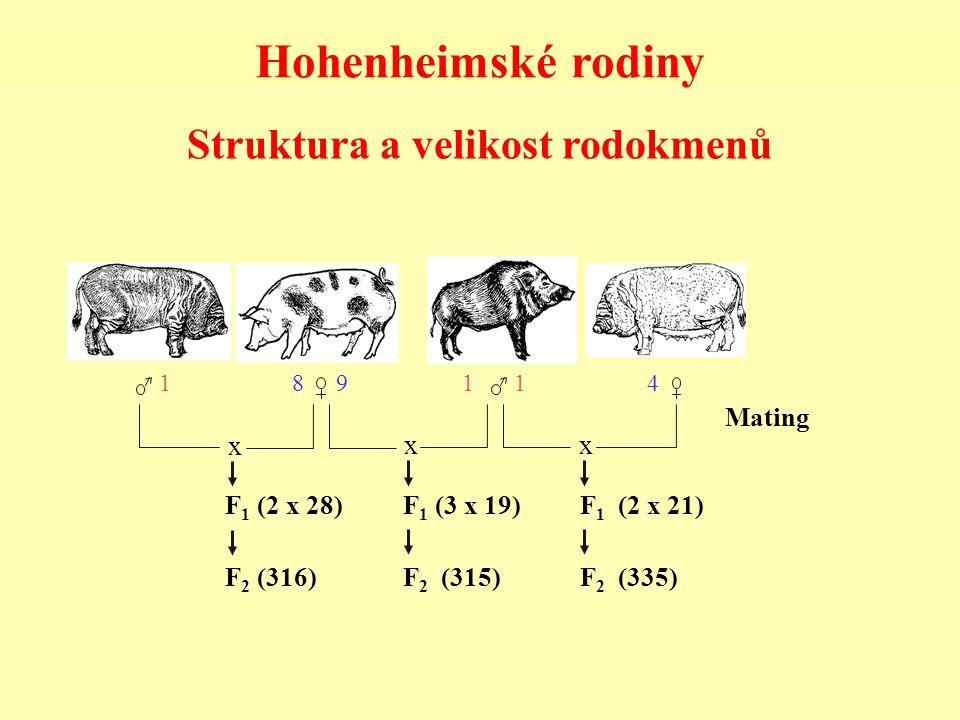 Struktura a velikost rodokmenů