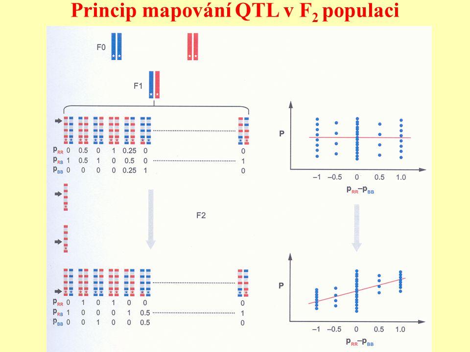 Princip mapování QTL v F2 populaci