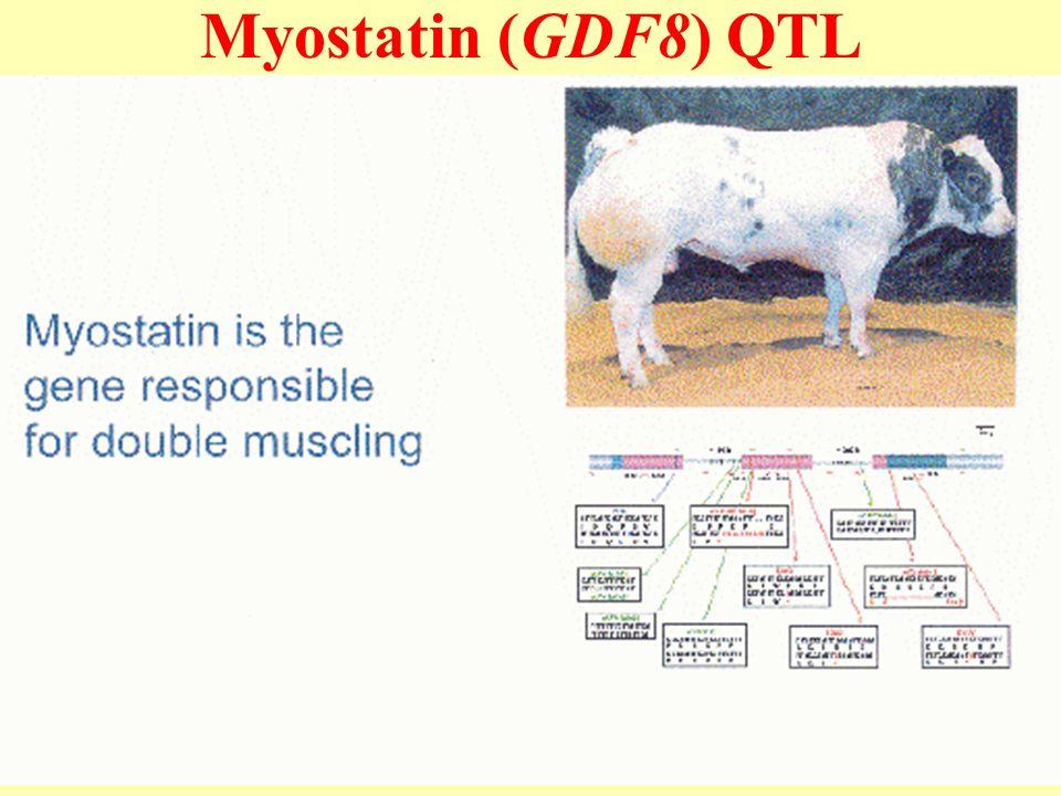 Myostatin (GDF8) QTL