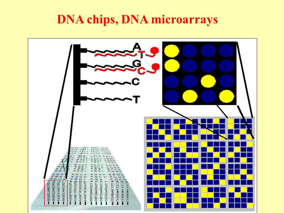 DNA chips, DNA microarrays