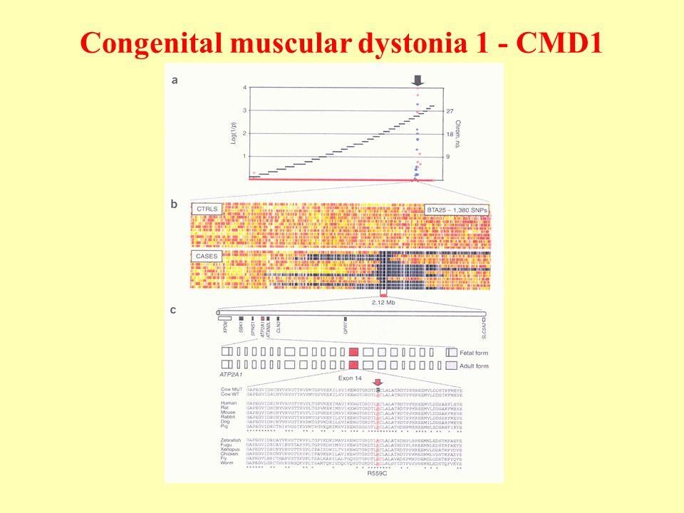Congenital muscular dystonia 1 - CMD1
