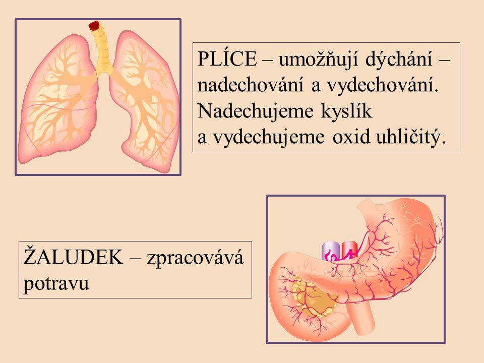 PLÍCE – umožňují dýchání –