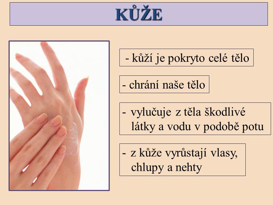 KŮŽE - kůží je pokryto celé tělo - chrání naše tělo