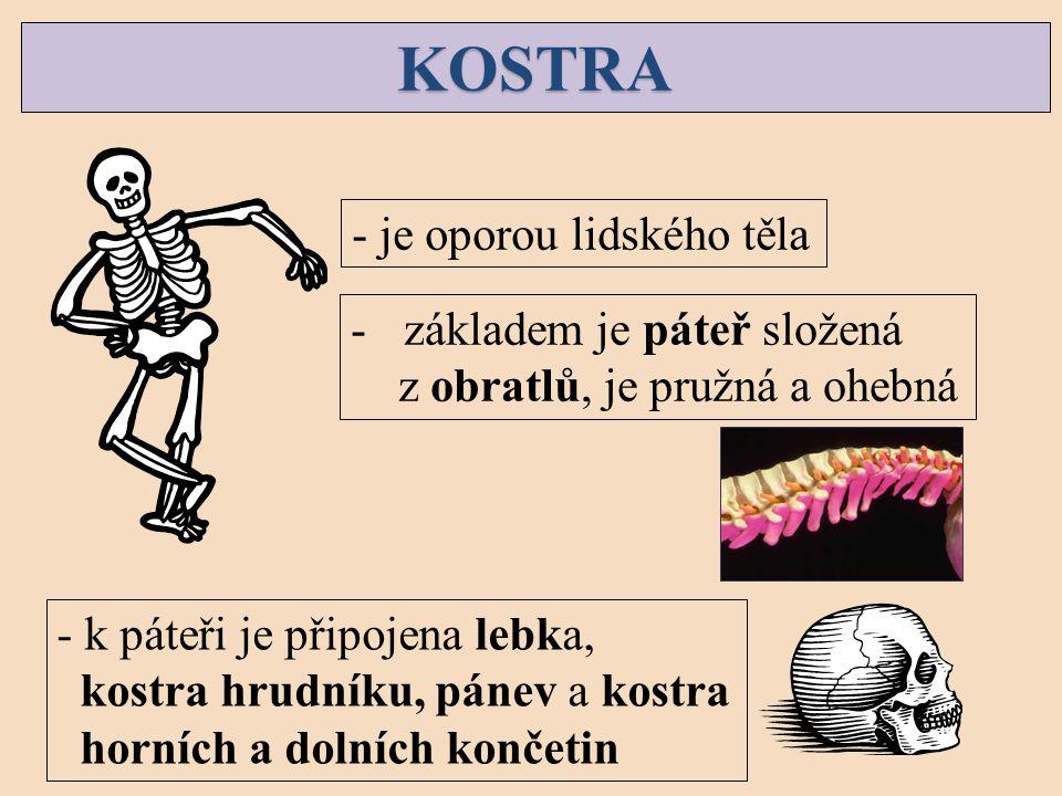 KOSTRA - je oporou lidského těla základem je páteř složená