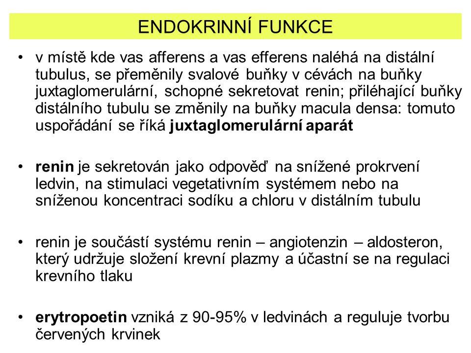 ENDOKRINNÍ FUNKCE