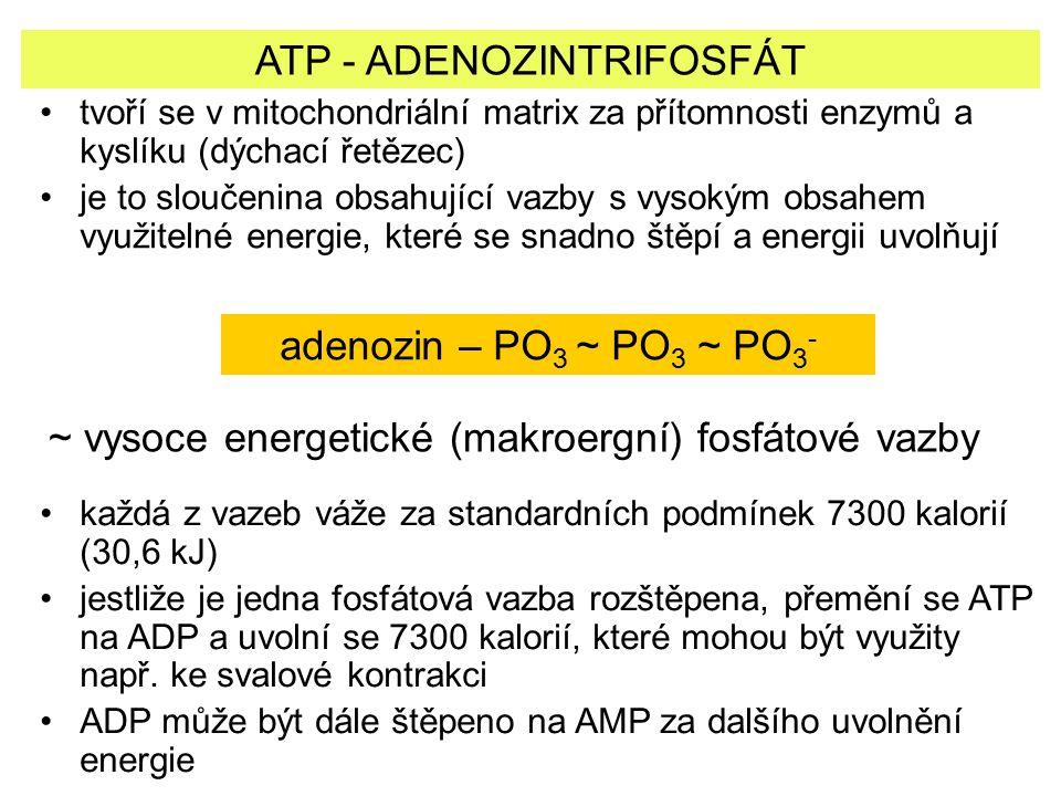 ATP - ADENOZINTRIFOSFÁT
