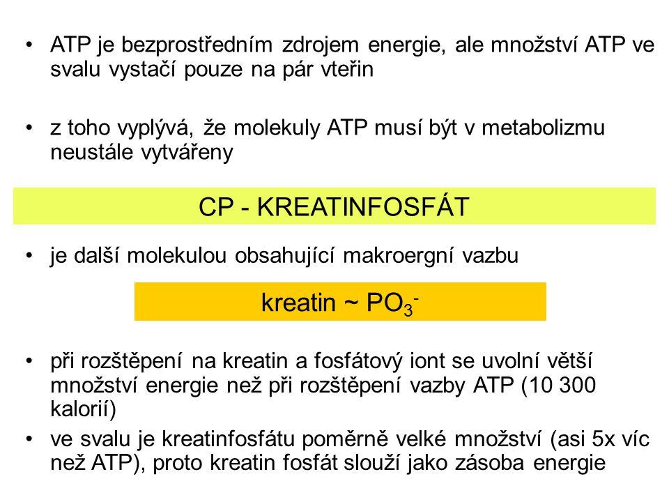 CP - KREATINFOSFÁT kreatin ~ PO3-