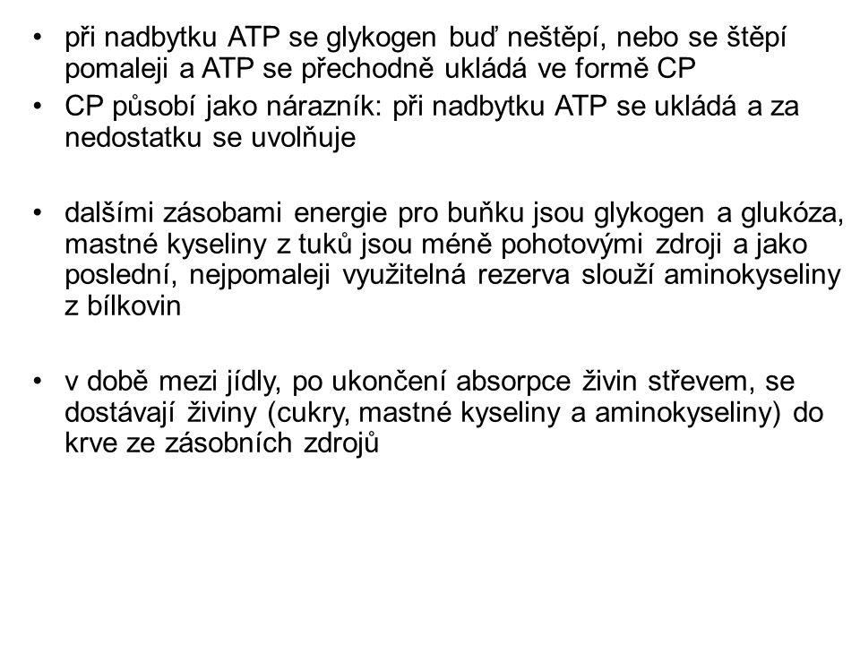 při nadbytku ATP se glykogen buď neštěpí, nebo se štěpí pomaleji a ATP se přechodně ukládá ve formě CP