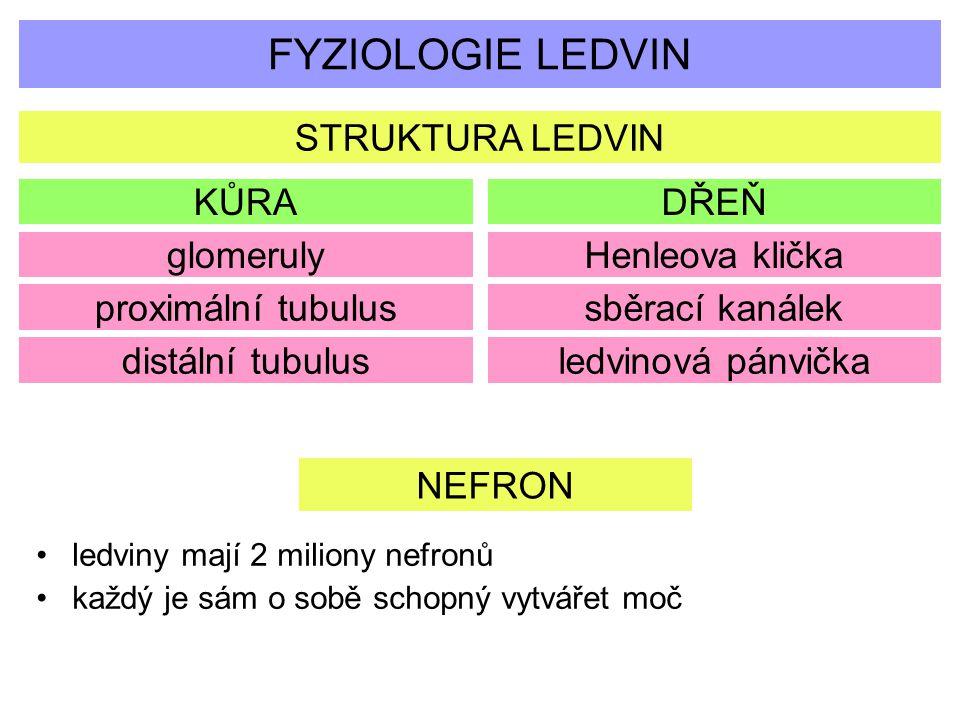 FYZIOLOGIE LEDVIN STRUKTURA LEDVIN KŮRA DŘEŇ glomeruly Henleova klička