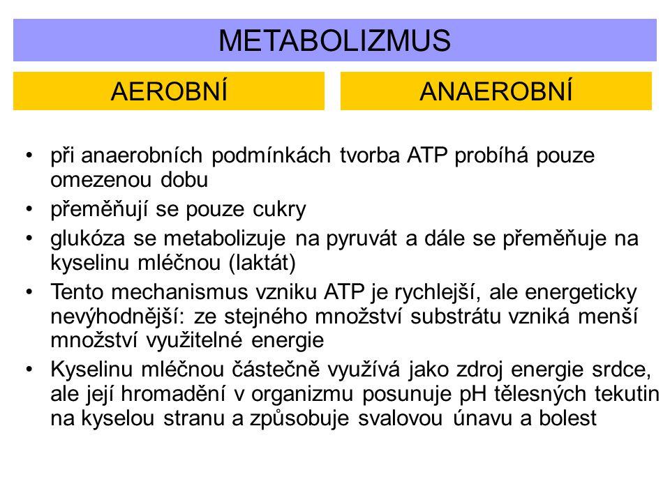 METABOLIZMUS AEROBNÍ ANAEROBNÍ