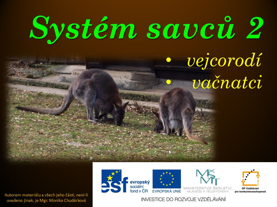 Systém savců 2 vejcorodí vačnatci