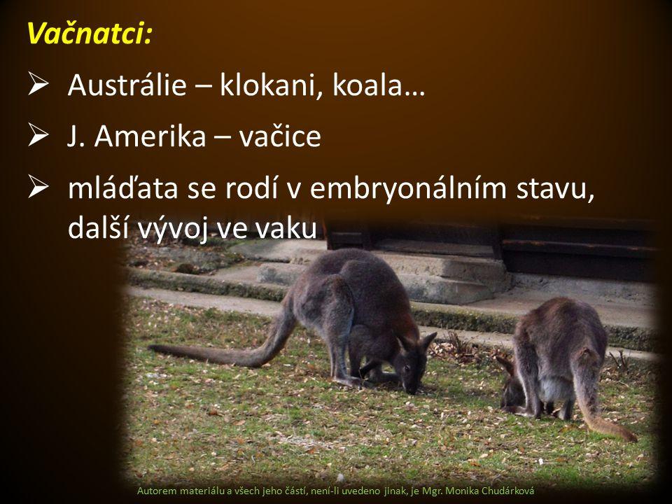 Austrálie – klokani, koala… J. Amerika – vačice