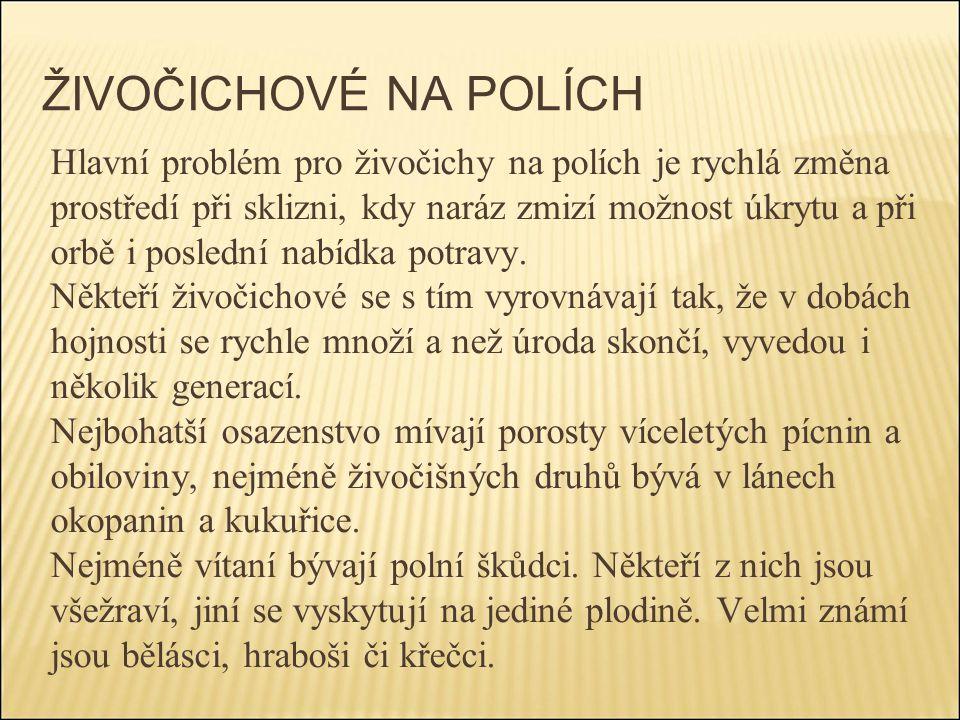 ŽIVOČICHOVÉ NA POLÍCH