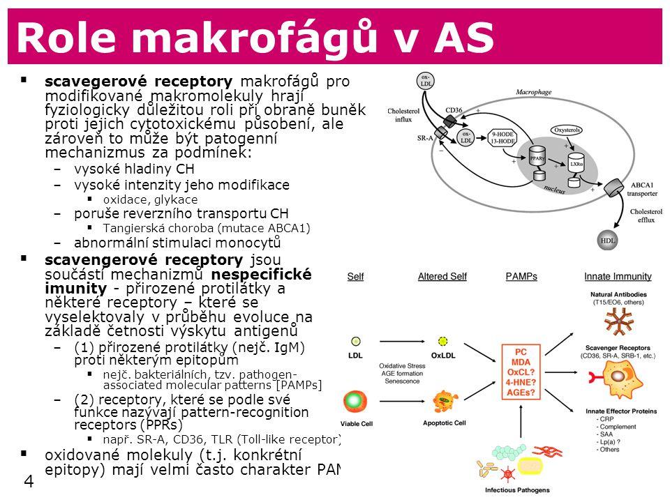 Role makrofágů v AS