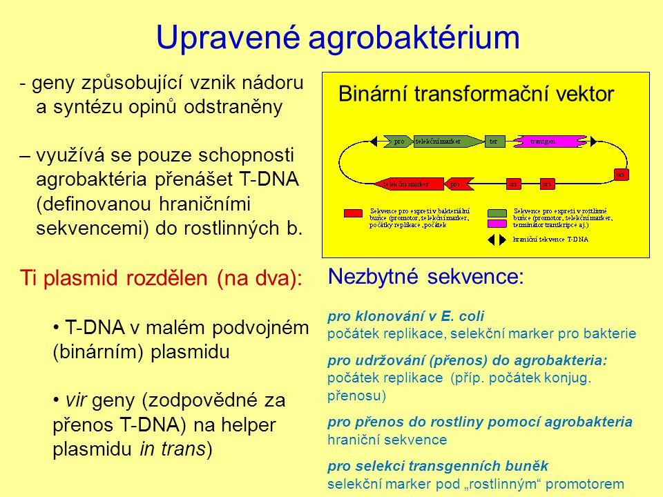 Upravené agrobaktérium