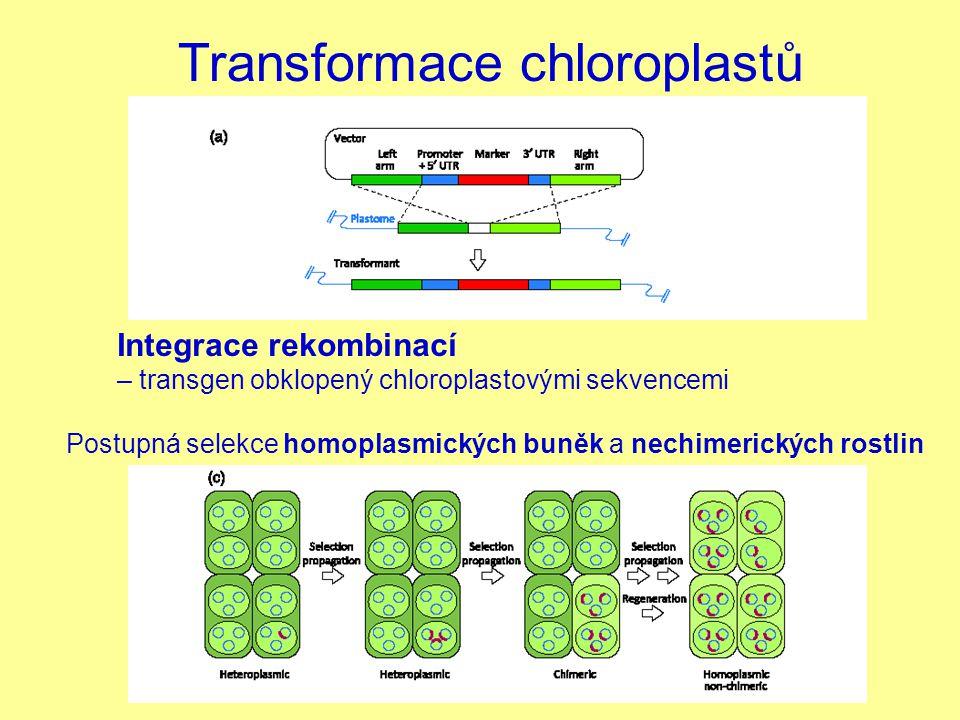 Transformace chloroplastů