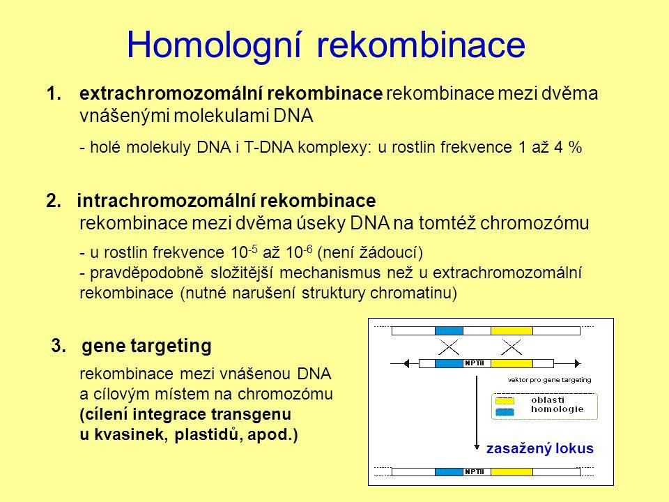 Homologní rekombinace