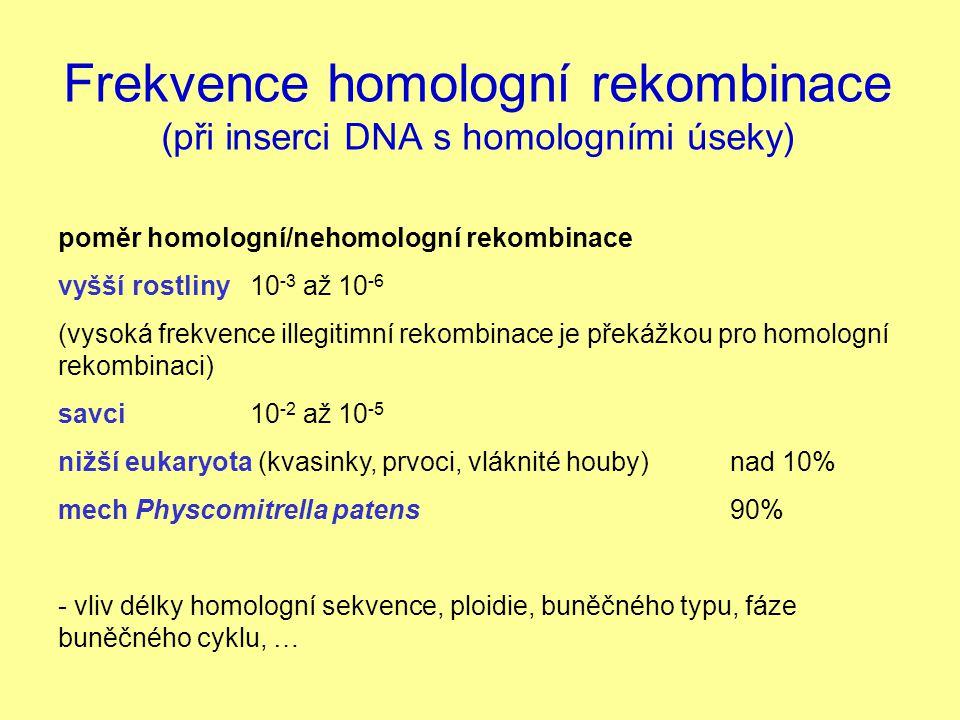 Frekvence homologní rekombinace (při inserci DNA s homologními úseky)