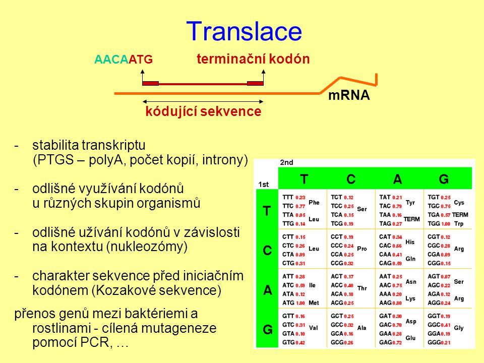 Translace mRNA stabilita transkriptu