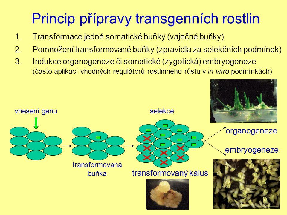 Princip přípravy transgenních rostlin