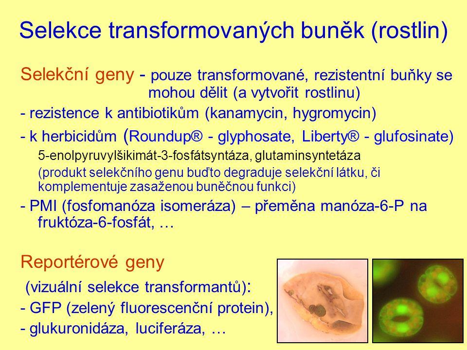 Selekce transformovaných buněk (rostlin)