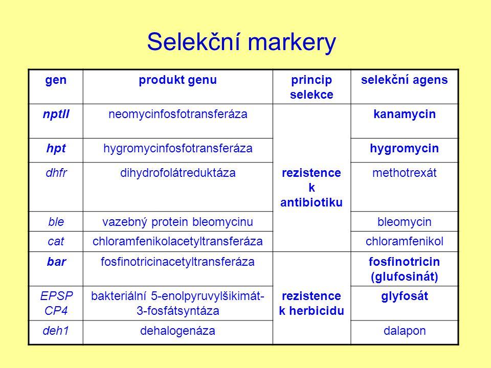 Selekční markery gen produkt genu princip selekce selekční agens nptII