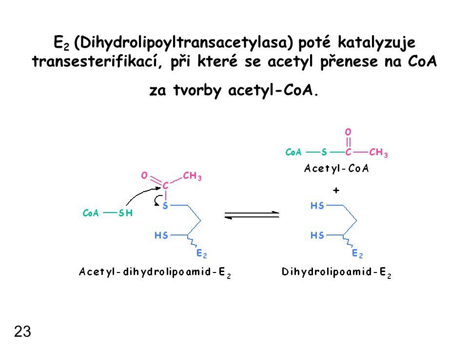 E2 (Dihydrolipoyltransacetylasa) poté katalyzuje transesterifikací, při které se acetyl přenese na CoA za tvorby acetyl-CoA.