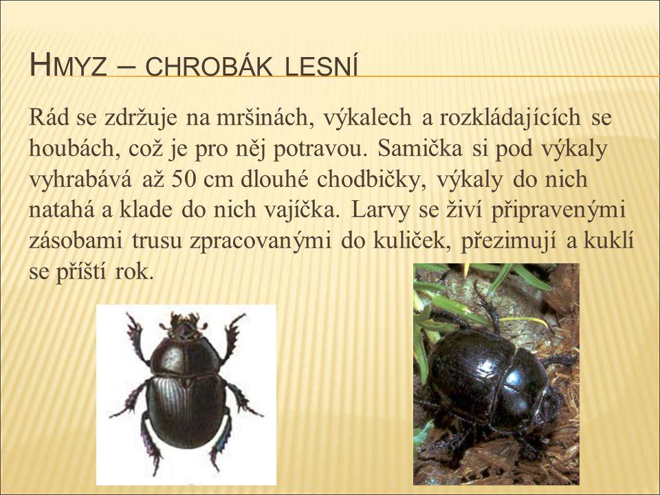 Hmyz – chrobák lesní