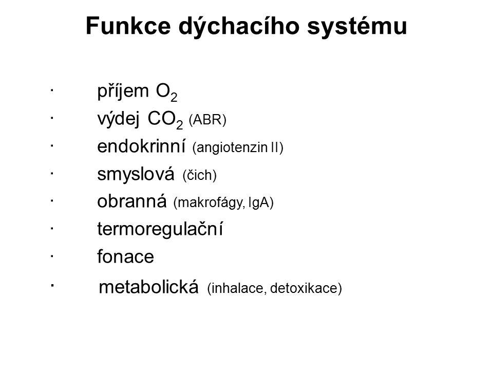 Funkce dýchacího systému