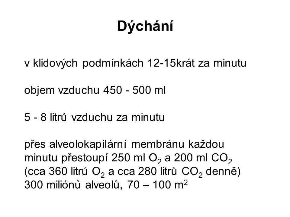 Dýchání v klidových podmínkách 12-15krát za minutu