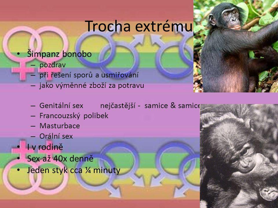 Trocha extrému Šimpanz bonobo I v rodině Sex až 40x denně