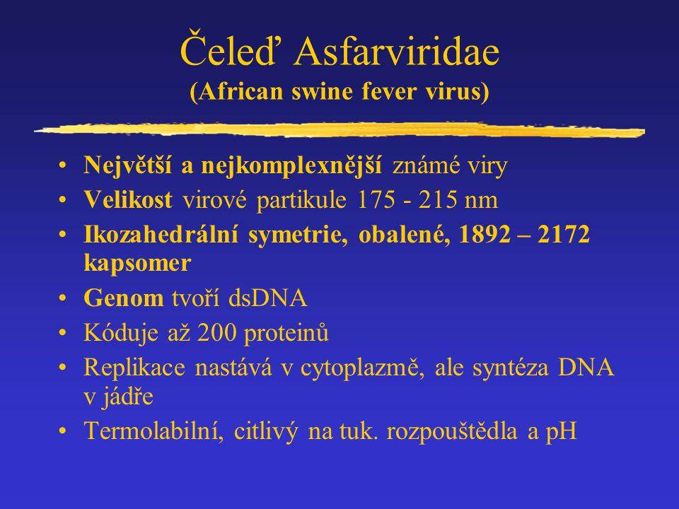 Čeleď Asfarviridae (African swine fever virus)