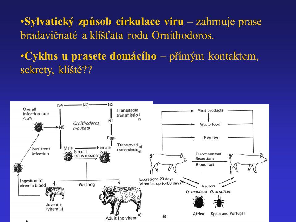 Sylvatický způsob cirkulace viru – zahrnuje prase bradavičnaté a klíšťata rodu Ornithodoros.
