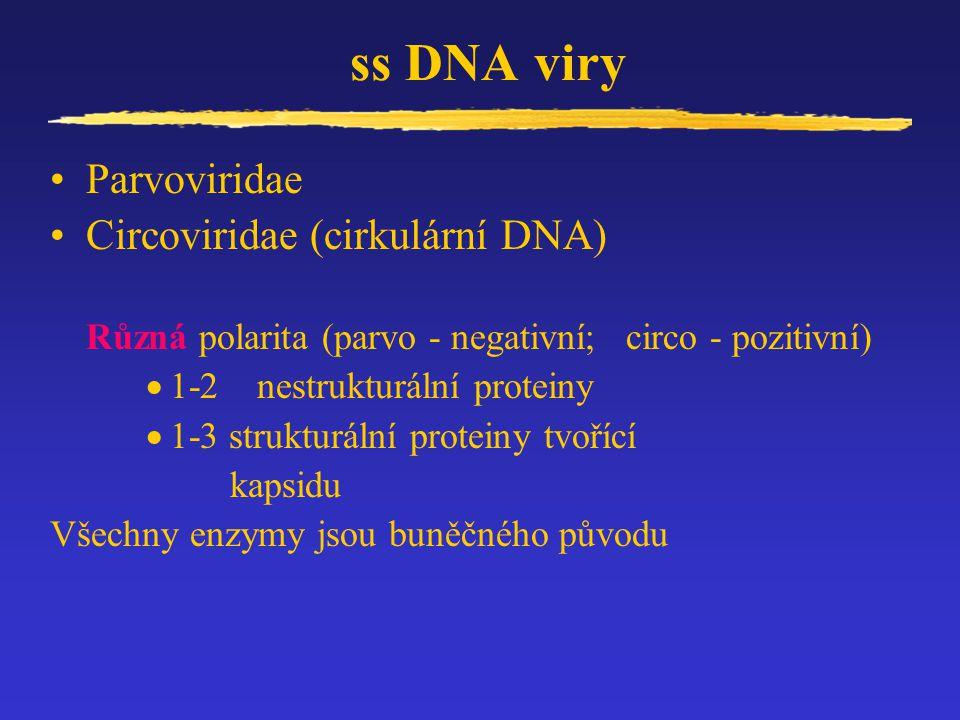 ss DNA viry Parvoviridae Circoviridae (cirkulární DNA)