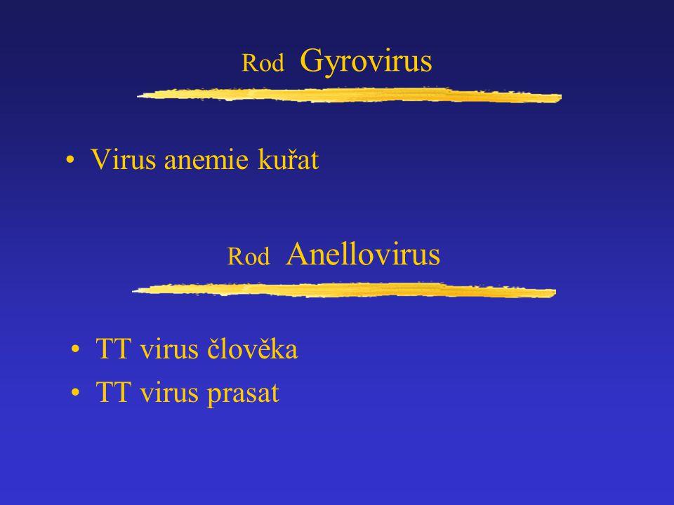 Virus anemie kuřat TT virus člověka TT virus prasat Rod Gyrovirus
