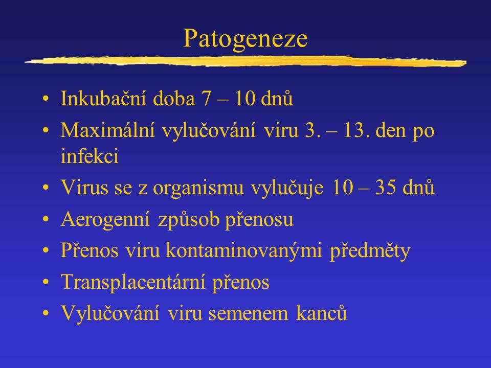 Patogeneze Inkubační doba 7 – 10 dnů