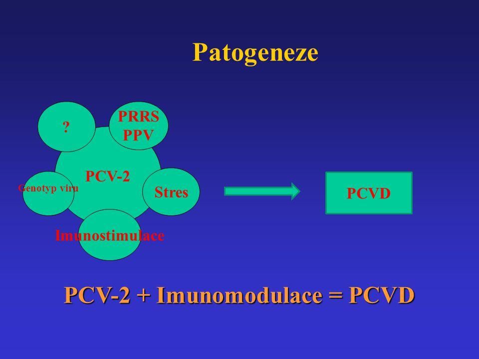 Patogeneze PCV-2 + Imunomodulace = PCVD PRRS PPV PCV-2 Stres PCVD