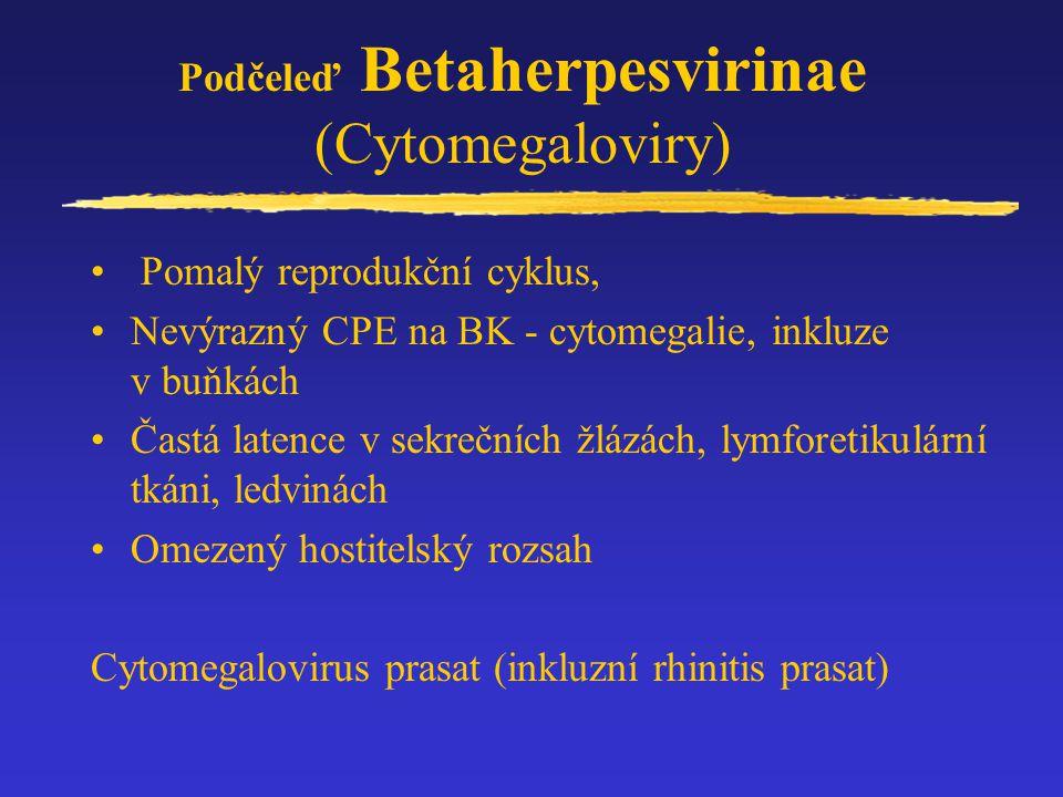 Podčeleď Betaherpesvirinae (Cytomegaloviry)