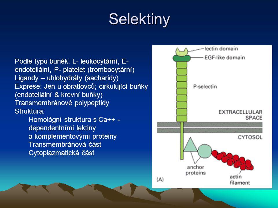 Selektiny Podle typu buněk: L- leukocytární, E- endoteliální, P- platelet (trombocytární) Ligandy – uhlohydráty (sacharidy)