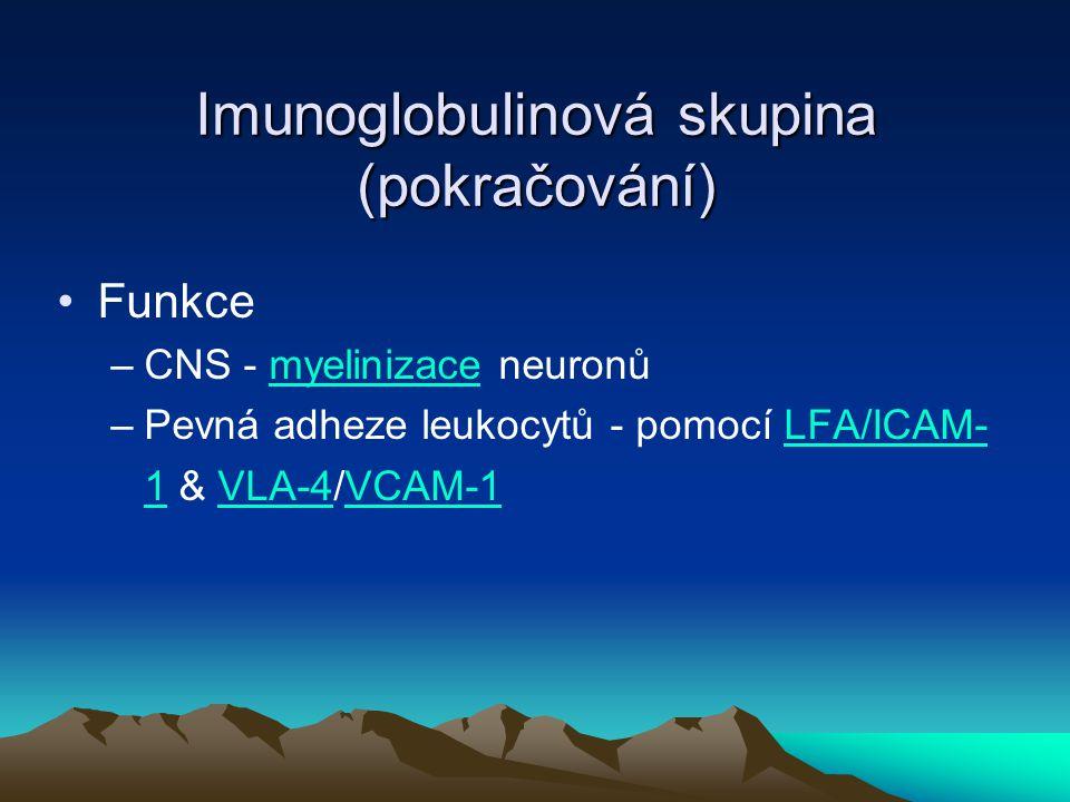 Imunoglobulinová skupina (pokračování)