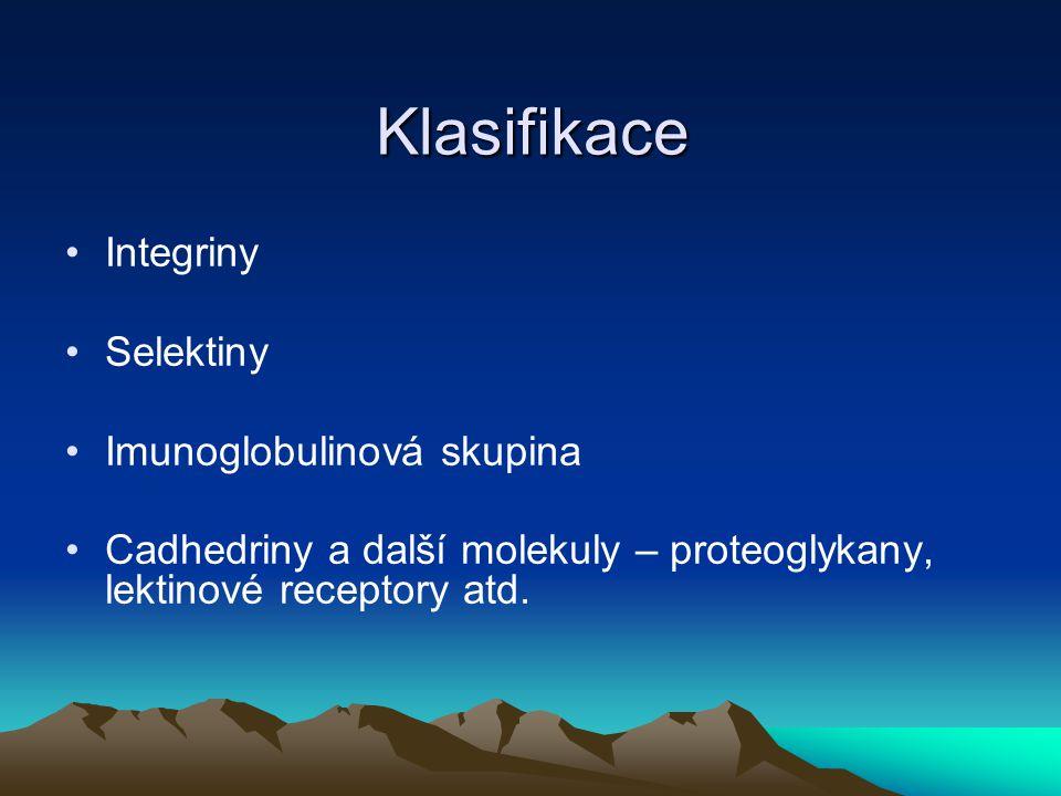 Klasifikace Integriny Selektiny Imunoglobulinová skupina