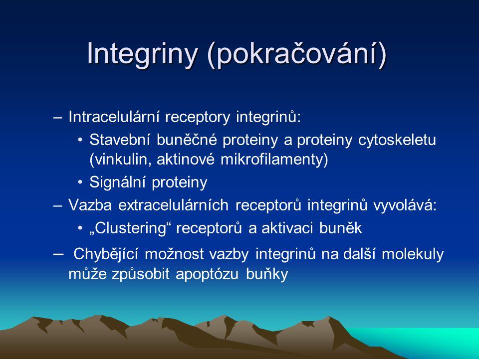 Integriny (pokračování)