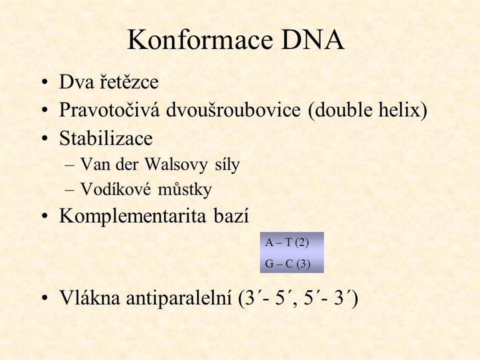 Konformace DNA Dva řetězce Pravotočivá dvoušroubovice (double helix)