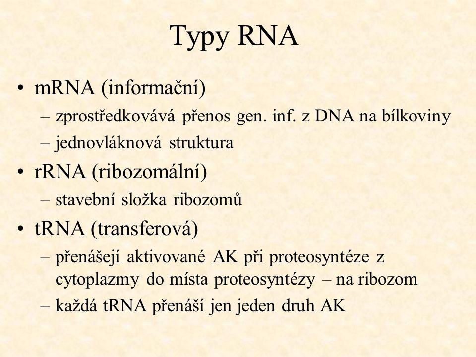 Typy RNA mRNA (informační) rRNA (ribozomální) tRNA (transferová)