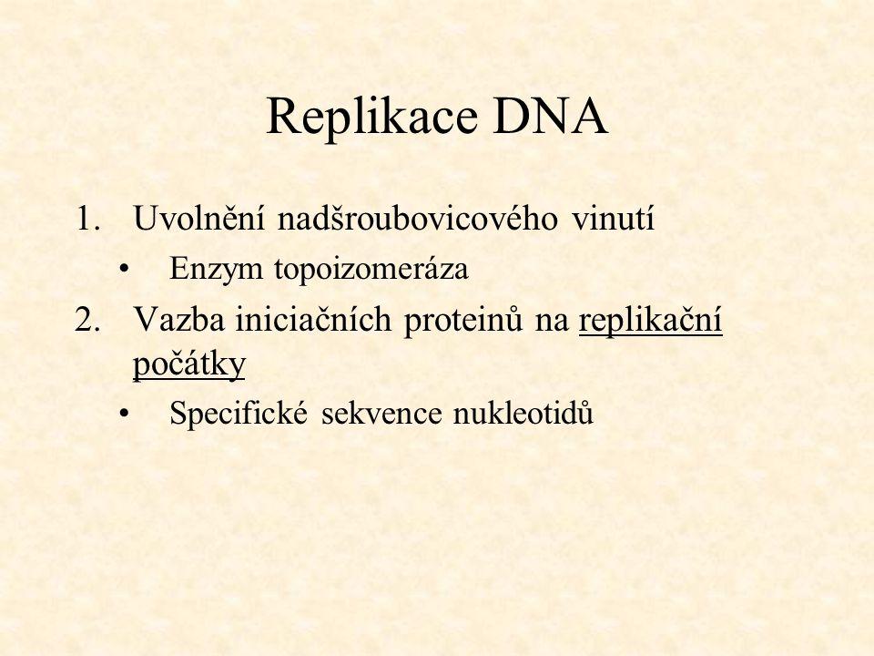 Replikace DNA Uvolnění nadšroubovicového vinutí