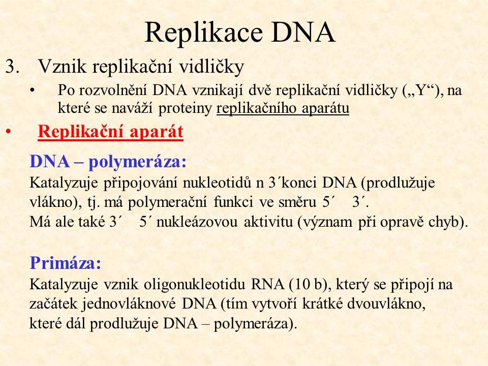 Replikace DNA Vznik replikační vidličky Replikační aparát
